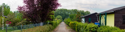 path in a allotment garden, hedges left and right on the path Fototapeta