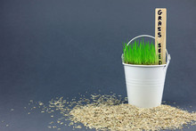 Germinating Grass Seed Growing...