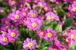 canvas print picture - Beautiful floral landscape. Bright spring flowers