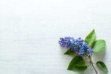 Fresh Blue Lilac Flowers Frame