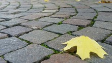 Close-up Of Leaf On Paving Sto...