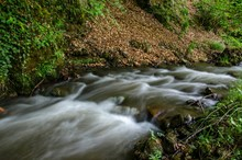 River Flowing By Field In Forest