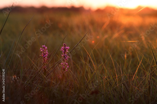 Fototapety, obrazy: Close-up Of Purple Flowering Plant On Field