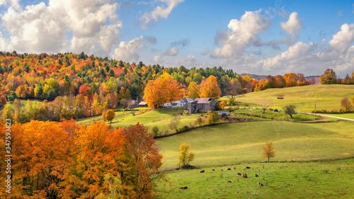 Obraz na płótnie Brilliant golden fall colors in Vermont Countryside farm during Autumn near Wood