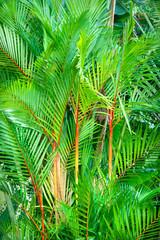 Panel Szklany Podświetlane Eko Plant leaf