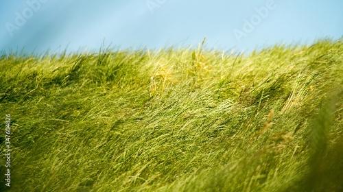 Fotografering Windblown Grass