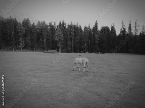 Sheep Grazing On Field Slika na platnu