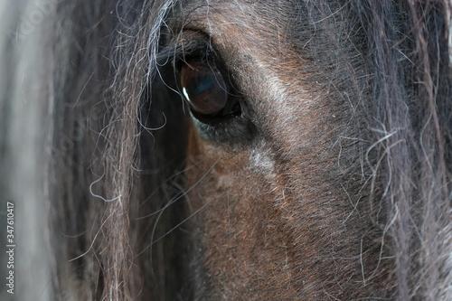 Foto Pferdeauge