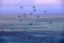 Seagulls Flying Over Ocean Against Sky