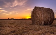 Hay Bales In Wheat Field At Sunset