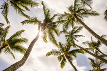 A Group Of Palm Trees With The...