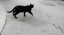 High Angle View Of Black Cat Walking On Road