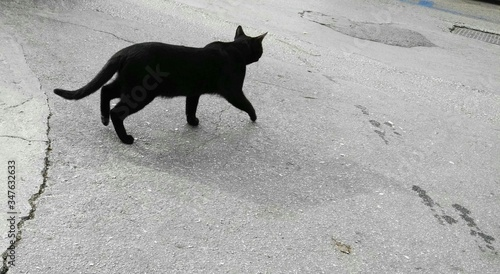 Fotografía High Angle View Of Black Cat Walking On Road