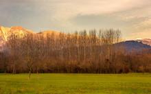 Autumn Sunrise With Barren Tre...