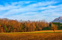 A Beautiful Autumn Country Field With One Mulberry Tree In Friuli Italy