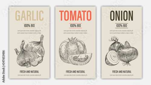 Fototapeta Set of template for branding, cover package, banner, card, label with garlic, tomato and onion in retro vintage hand drawn or sketche style. Modern background. Vector illustration obraz