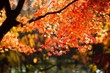 canvas print picture - Close-up Of Maple Tree During Autumn
