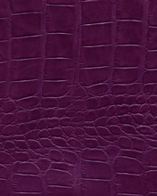 Purple Alligator Leather, High Resolution Reptile Skin. Texture And Background Of Crocodile Leather Or Alligator Dark Black Skin In Square Pattern For Wallets, Purse, Bags And Interior Design.