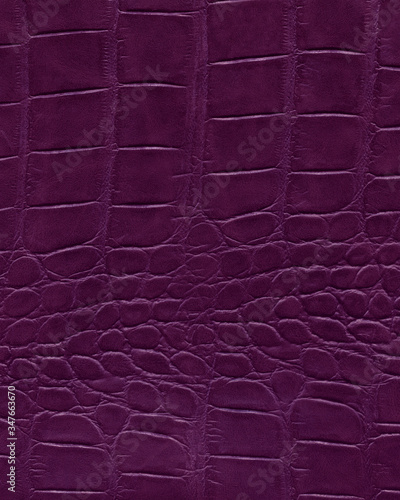 Purple alligator leather, high resolution reptile skin Canvas Print