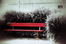 Red Empty Bench Against Snowed Plants