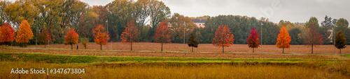 Fotografie, Obraz Trees On Field Against Sky During Autumn