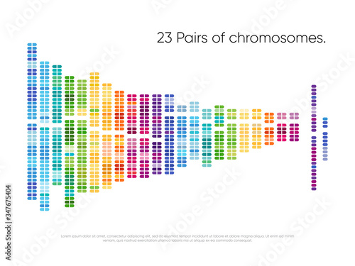 Photo Chromosomes pairs