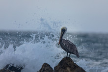 Photo Of A Pelican Shot At Cartagena Colombia