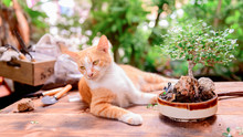 Home Gardening With Cat When L...