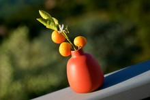 Close-up Of Orange Fruit Plant Vase