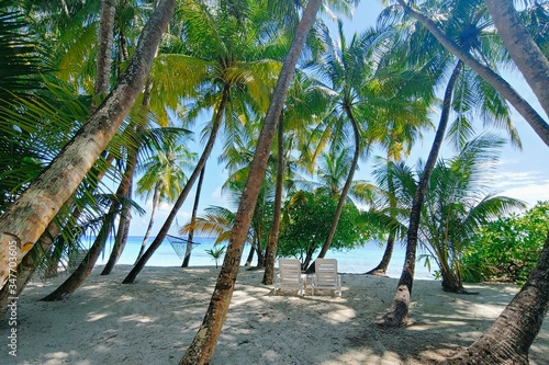 Leinwand Poster Beautiful shot of tropical Maldives beach with palm trees in Baa Atoll Island