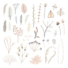 Cute Set Of Hand Drawn Plants. A Collection Of Dried Flowers. Vintage Style For Your Illustrations.