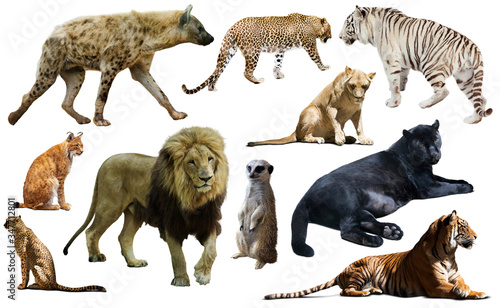Foto Set of wild mammals isolated over white