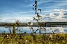 Plants Growing On Lakeshore