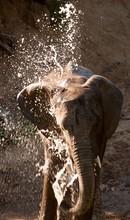 View Of Elephant Splashing Water