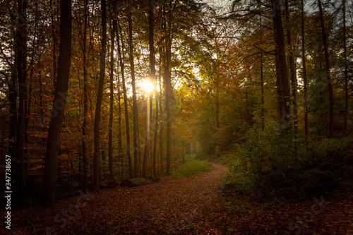 Fototapety, obrazy: Trees Growing In Forest During Autumn