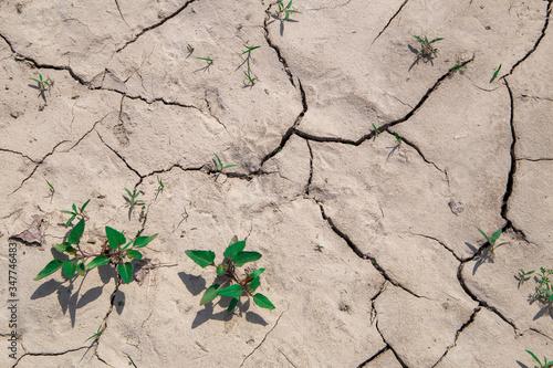 Fotografija land desertification summer drought Italian countryside