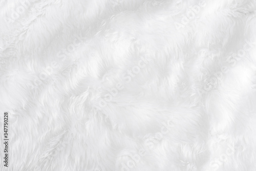 Closeup animal white wool sheep background in top view light natural detail, grey fluffy seamless cotton texture Fotobehang