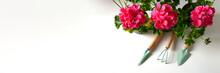 Red Geranium Flower.Balcony Plant, Home Garden Tools. Close Up. Spring Time Season. Banner.