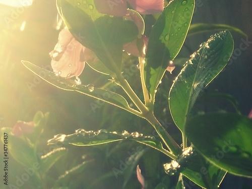 Papel de parede Close-up Of Flowers