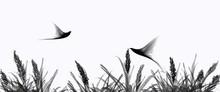 Birds Flying Silhouette On Gra...