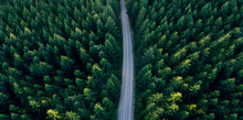 Top View Of Dark Green Forest ...