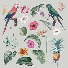 Macaw Foliage Illustration