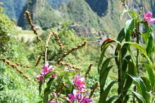 Close-up Of Wildflowers Growin...