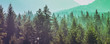 canvas print picture - Pine trees green forest stylized silhouette photo banner background