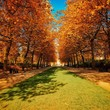 Footpath Surrounded By Autumn Trees