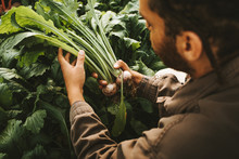 Male Gardener Holding Freshly ...