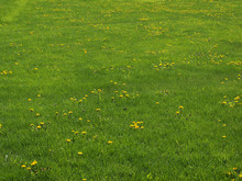 Large Green Field With Grass U...