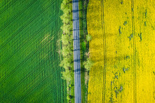 Top View Of Yellow And Green R...