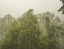 Scenic View Of Forest Against Clear Sky During Rainfall