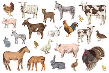 Large Set Of Farm Animals With...